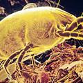Leggyakoribb allergének: poratkák, virágpor és állatszőr