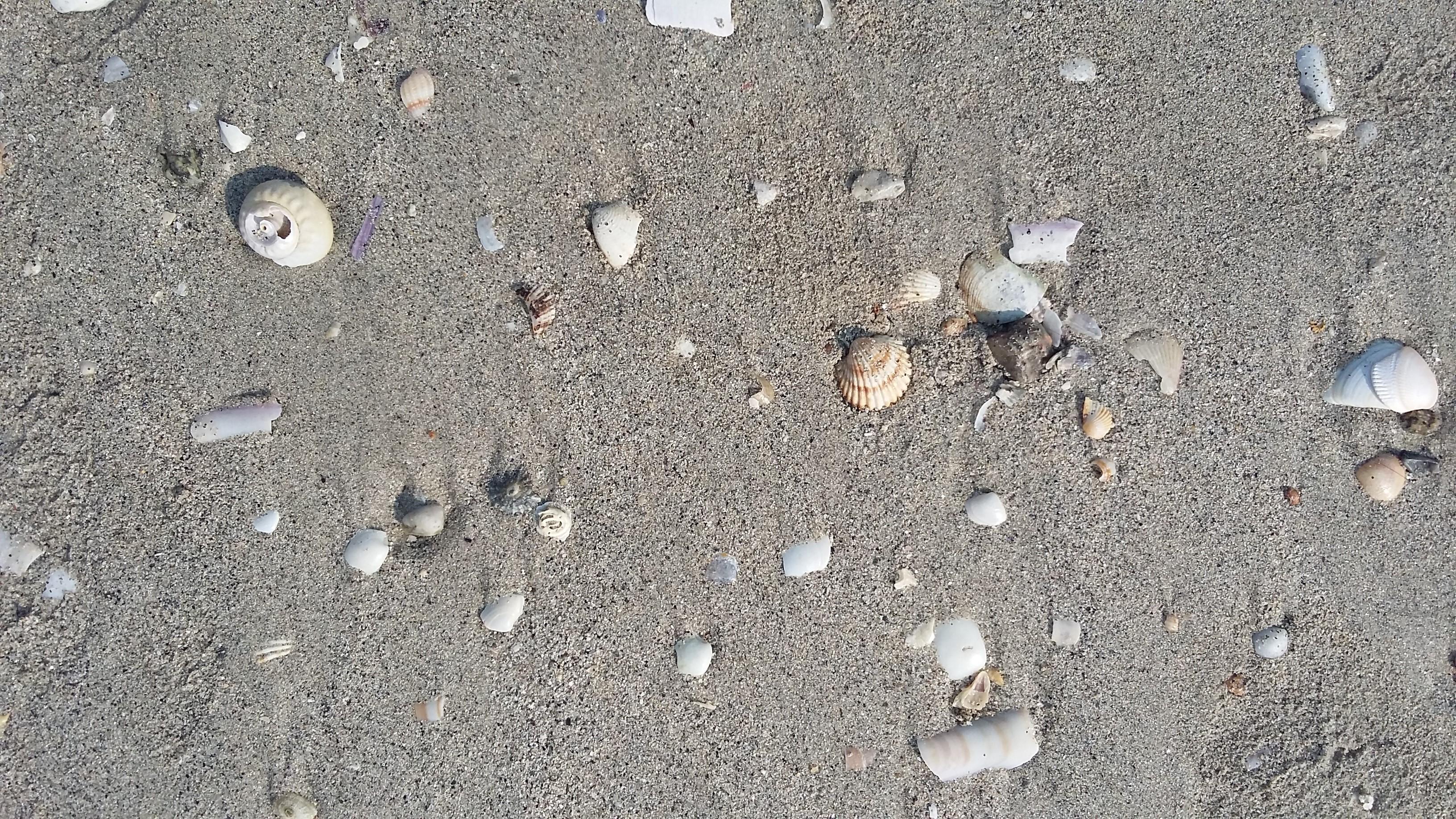 Escaselas Playa de Langosteira. Kagylók a homokban.