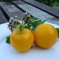 5+1 sárga, zöld, fekete, színes paradicsom a kiskertbe