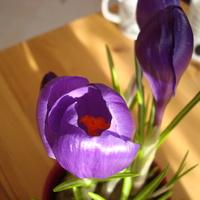 Gondolatok kora tavasszal