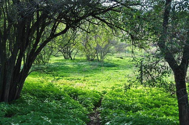 forest-515223_640.jpg