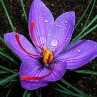 A világ legdrágább virágai