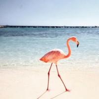 Hogyan készítsünk szuper nyári fotókat?