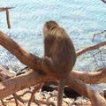 Thaiföld, Majmok szigete