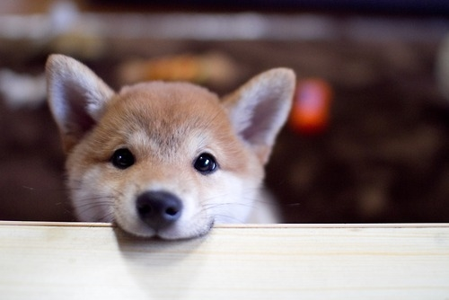 53451-cute-dog.jpg