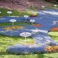 Esterházy hercegé volt egykor a legnagyobb német virágsziget