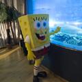 A világ leghíresebb tengeri szivacsa is megünnepli az állatok világnapját