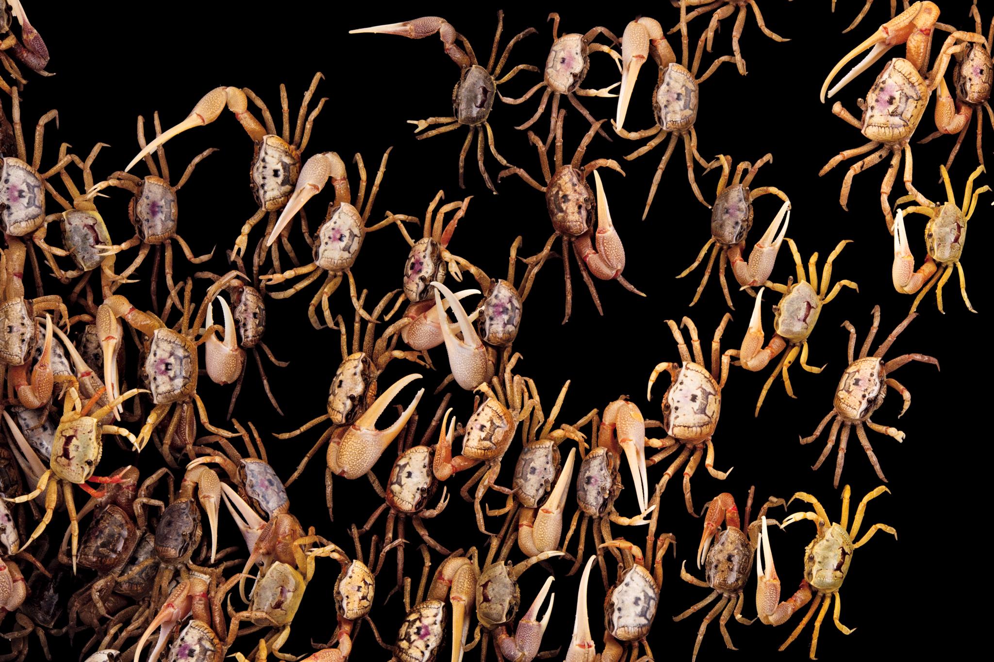 fiddler_crabs.jpg