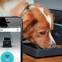 Kutyák/macskák okos etetése okostelefonnal