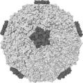 Az orrdugulás oka rhinovírus okozta náthában