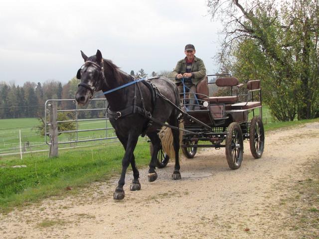 """""""Nyomi"""" - avagy van-e a magyar lovasnak stílusa...?"""