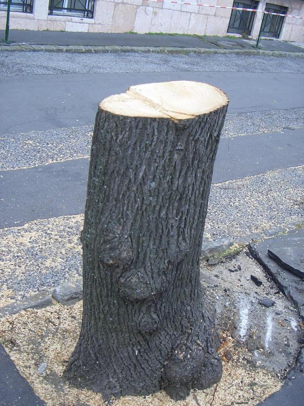 Jó metszlap_rossz fa.jpg