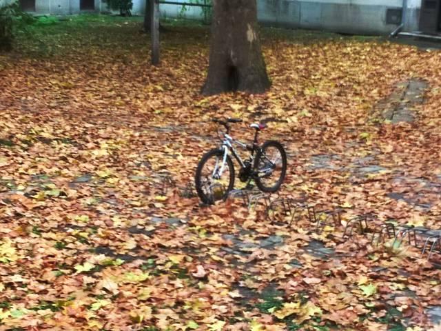 Fotócsütörtök - Viszlát ősz!