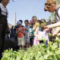 Új lakók a Negyedben: 2000 fűszernövény érkezett