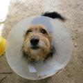 Morzsi, az új kutyánk