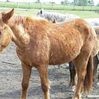 Összeomlott a hierarchia a Bottyán Equus Állatotthonban a lovak között!