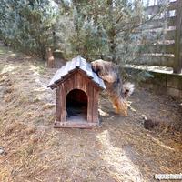 Állatvédők Szilvesztere