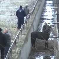 A vízelvezető árokba esett ló