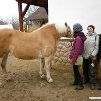 Névlegesen örökbefogadtak egy lovat!
