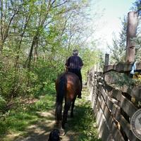 Találtunk egy lovat!