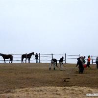 És megint hétvége és buli a Bottyán Equusnál!!! :)
