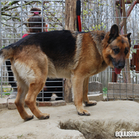 Rénó az új kutyánk története és egy kis Meggy