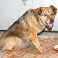 Az öreg Morzsi kutya története