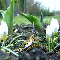 Kerti növények tavasszal