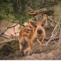 Let me play with you #wildboar #wild #wildpig #hunt #hunter #hunters #hunting #huntingdog #ikozosseg #repost #hunstagram #yolo #mik #erdő #erdozugas #nature #naturephotography #followusonfacebook #boarhunt #boarhunter