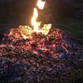 Spring fire #fire #spring #season #hunt #hunter #hunting #forest #outinthewild #wild #erdő #erdozugas #mik #yolo #ikozosseg #hunstagram