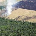 Környezetvédők az erdőirtás mellett