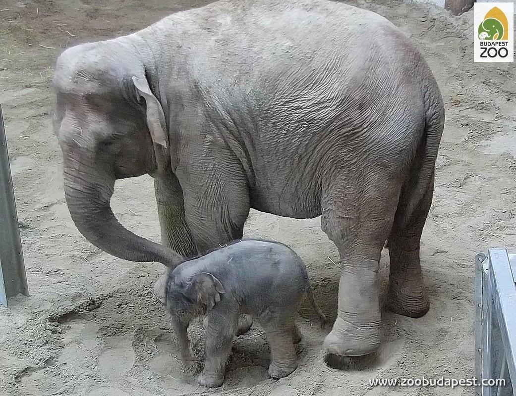 elephantbaby0.jpg