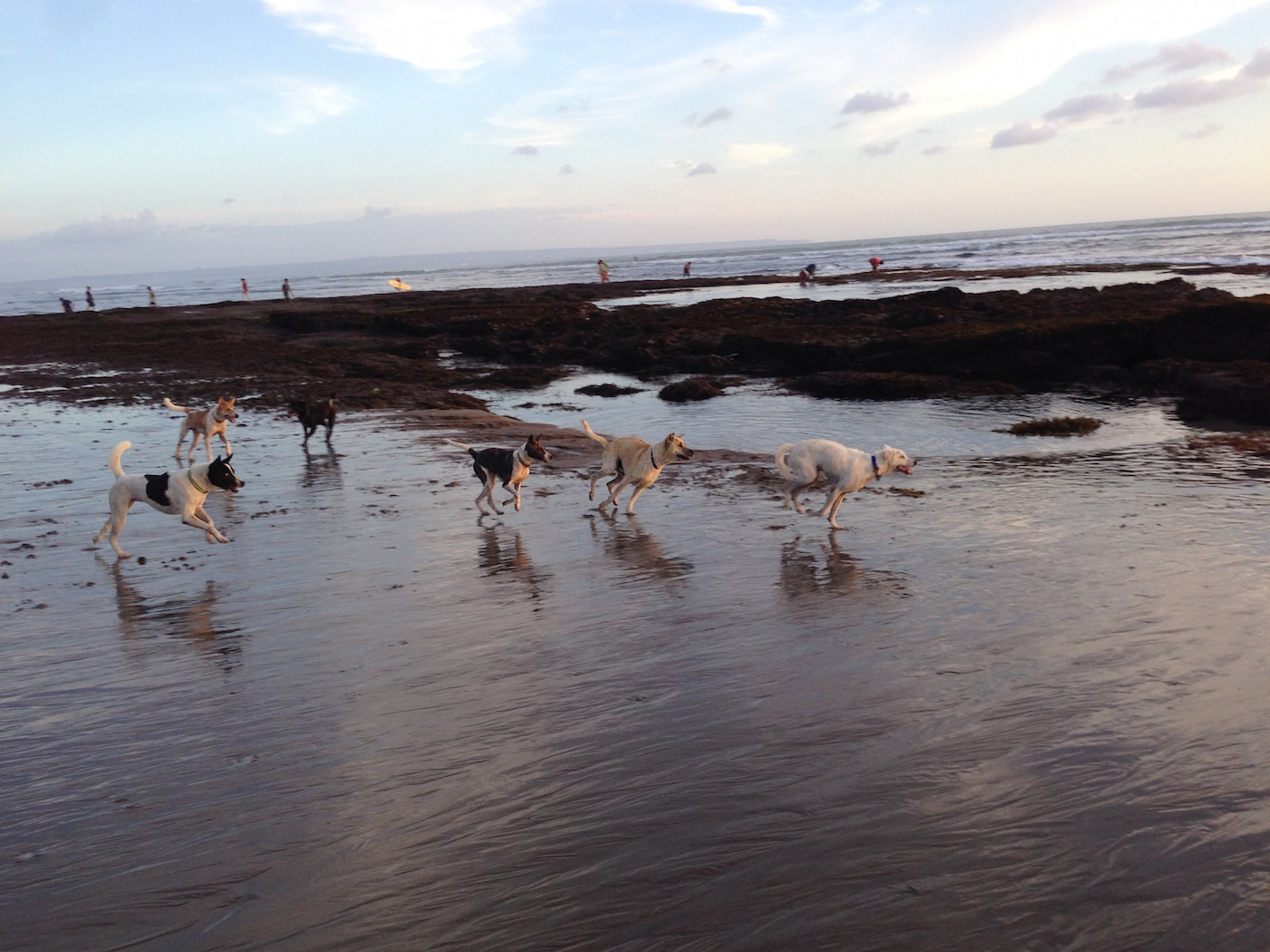 free-ranging_and_companion_bali_dog_interaction_photo_credit_marco_adda.jpg
