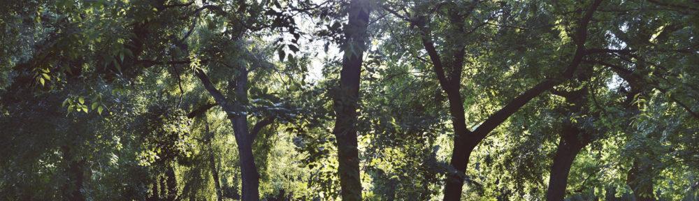 cropped-csz5996_sample_s-2.jpg
