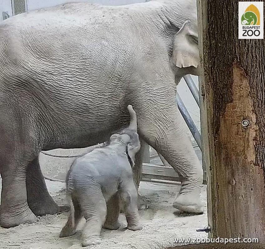 elephantbaby1.jpg