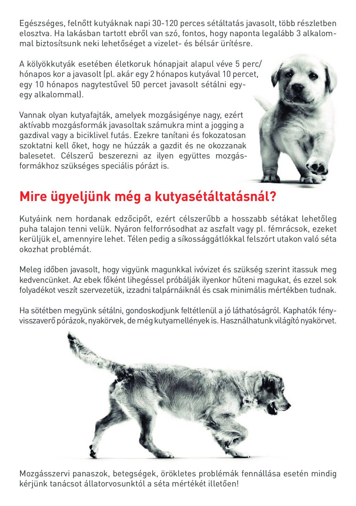 kutyas_t_ltat_si_aj_nl_sok_001.jpg