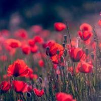 Európé virágoskertje: európai országok nemzeti virágai