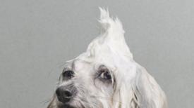 Kutya egy nap