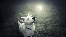 Képekkel a kutyákért