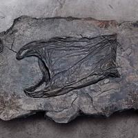 A jövő fosszíliái