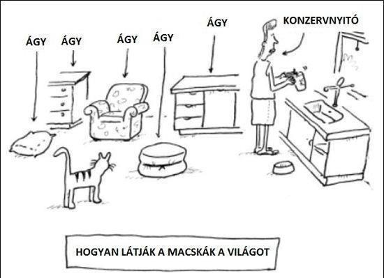 macskak_1358778028.jpg_550x399