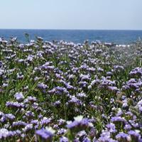 Újraindul a fapados az egyik legtutibb tengerparti nyaralóhelyre