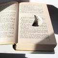 Titkos terek a könyvekben