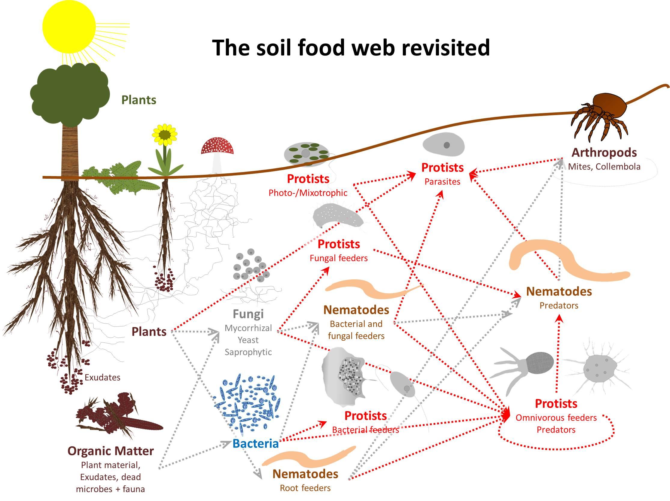 food_web_0.jpg