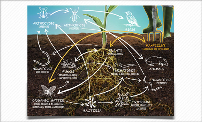 maxfields_soil_food_web1.jpg