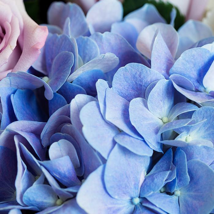 Kék hortenzia és egy kis vagányság