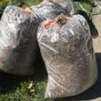 Égetés helyett - Őszi Zöldhulladék gyűjtési akció