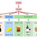 Mi fán terem a (lakto)fermentálás?