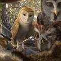 Az Őrzők legendája (Legend of the Guardians: The Owls of Ga'Hoole)