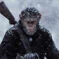 Box Office 2017 - 28.hét: Kívánj egy majomháborút!